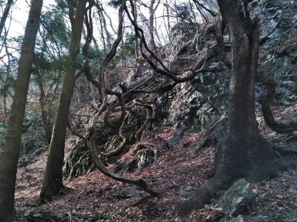 足利市最高峰。仙人ケ岳に家族登山